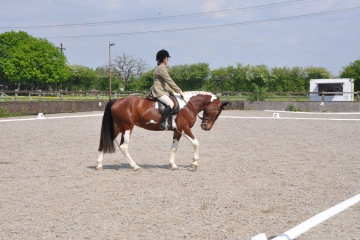 Dressage Series Competition 2